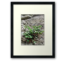 Growing from a Castle Wall Framed Print