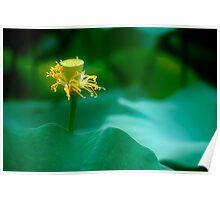 Lotus #49 Poster