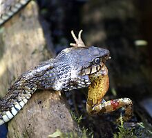 Now that's what I call a frog in the throat ! by robspics