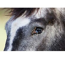 Blue Eyed Horse Photographic Print