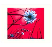 Red Dream Flowers Art Print