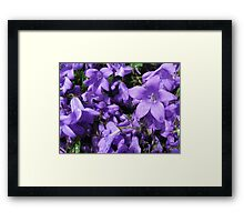 Purple Flowers with Rain Drops Framed Print