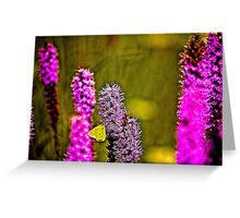 Prairie Blazing Star with Cloudless Sulphur Butterfly  Greeting Card