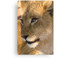 Baby Lioness, South Africa Canvas Print
