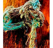 The Knot Photographic Print