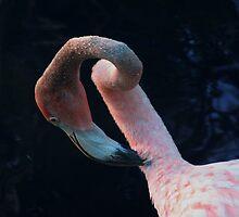 Flamingo by Dan Perez
