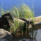 Old Stump at Waterfront by hynek
