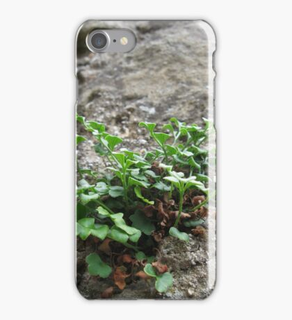 Growing from a Castle Wall iPhone Case/Skin