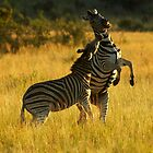 Fighting Stallions by Leon Rossouw