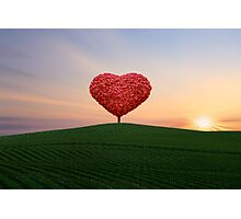 The little red heart tree  Photographic Print