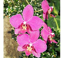 Pink Orchid Collage Photographic Print