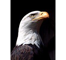 Eagle Profile Photographic Print