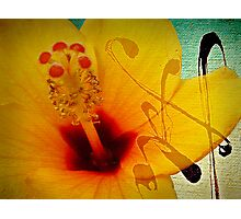 The flower... Photographic Print