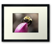 Can I Fit! Framed Print