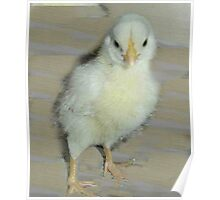 A Real Chick. Poster