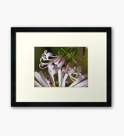 Flowering Curls Framed Print