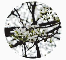 pear blossom by jenlinhua