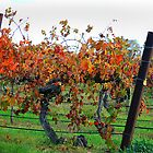 Autumn vines by Jenni Tanner