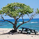 hawaii by Shaina Lunde
