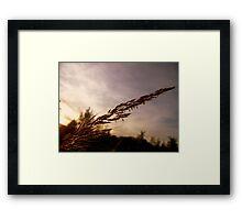 Blown Framed Print