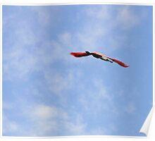 Roseate Egret Flying Poster