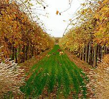 Autumn Vines by Angela Stewart