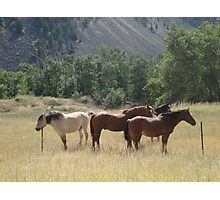 Outfitter's string Photographic Print