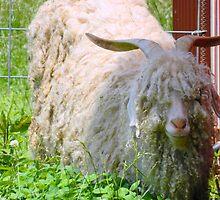 Mr. Shaggy Sheep  ^ by ctheworld