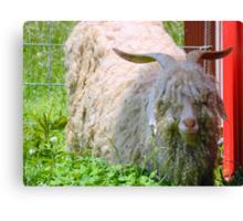 Mr. Shaggy Sheep  ^ Canvas Print