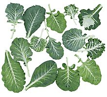 We're eating these wonderful collard greens... Photographic Print