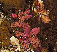 Faded Flowers by blacknight