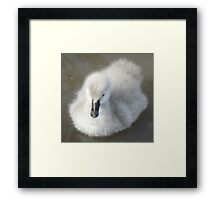 Fluff Ball Framed Print