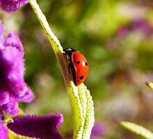 Ladybug, ladybug, fly away home... by ScarletSass