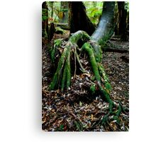 Tarkine Rainforest Canvas Print