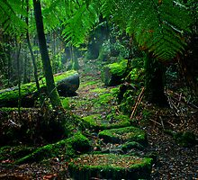 Tarkine Rainforest, Tasmania by Rhana Griffin