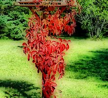 Virginia Creeper Vine by Teresa Zieba
