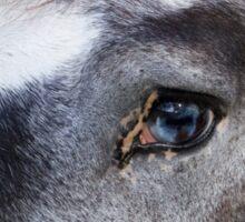 Blue Eyed Horse Sticker