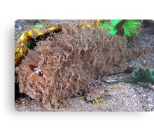 Hairy Frogfish Metal Print