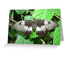 Orchard Butterfly III Greeting Card