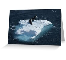 Seal, Lemaire Channel Greeting Card