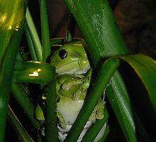 froggie 1 by Matthew C