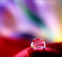 A red bubble....? by Mary Trebilco