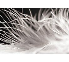 Feather Soft Photographic Print