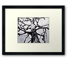 Dying Tree Framed Print