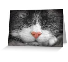 Color my black and white dreams Greeting Card