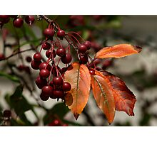 Fall in Pennsylvania - Berries & Leaves Photographic Print