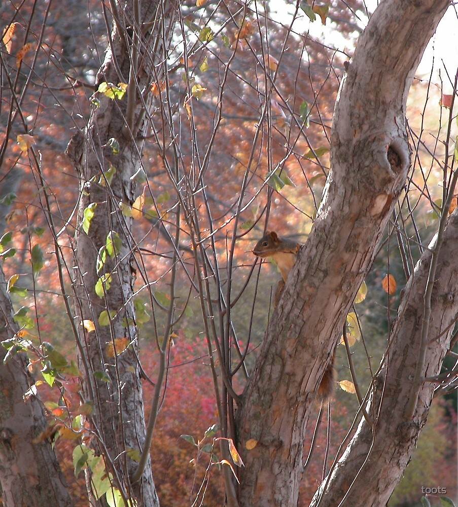 Little Squirrel in a tree, Blended hues by toots