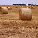 Harvest Time by Trevor Kersley