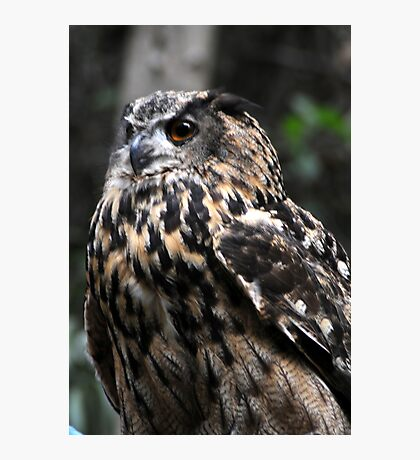 Eagle Owl Photographic Print