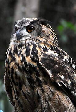 Eagle Owl by Anne Smyth